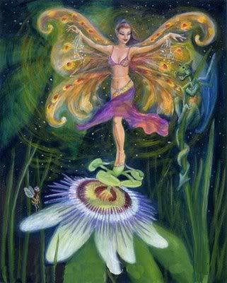 bellydance fairy