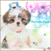 Cute Dog iconos <3