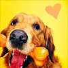 Dogs photo titled Cute Dog Icons