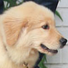 Dog Icons <3 - dogs icon