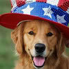 Hunde Foto with a sombrero called Dog Icons
