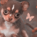 Dog Icons - dogs icon