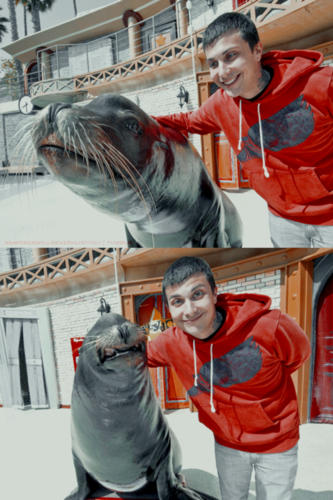 Frank Iero wolpeyper entitled Frank Iero @ Sea World!
