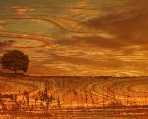 Sunset with pokok kertas dinding
