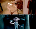 dobby! - dobby-the-house-elf photo