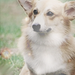 dogs - dogs icon