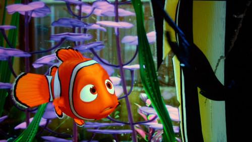 Finding Nemo kertas dinding entitled nemo
