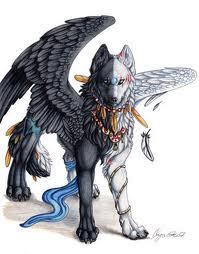 ying-yang wolf