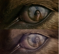 Bella-Renesmee - twilight-series photo