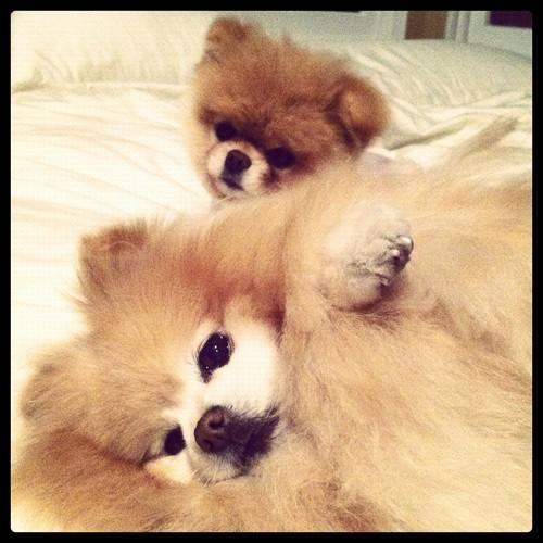 Boo & Buddy