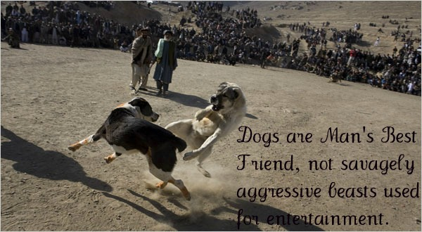 Against Dog Fighting Illegal Dog Fight