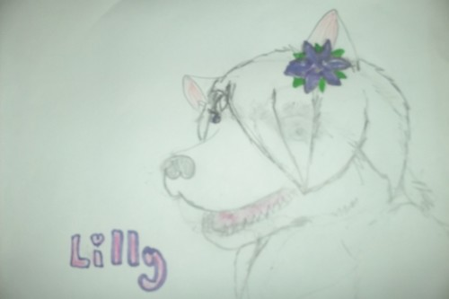 Lilly Drawing