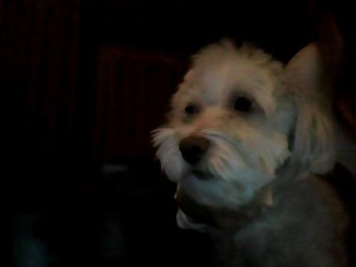 My dog Dudels