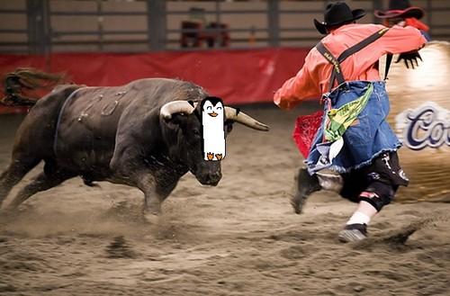riding a wild taureau, bull