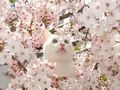 """Aww kitty... yay it's spring time!"" :D"
