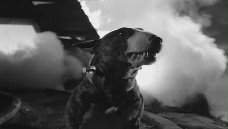 Frankenweenie 1984 Images & Pictures - Becuo Helena Bonham Carter