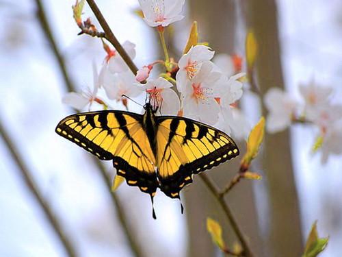 Spring wings