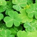 St.Patrick's Day - saint-patricks-day icon