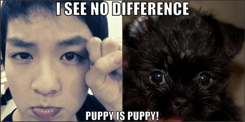 Teen parte superior, arriba Ricky = perrito, cachorro - I see no difference