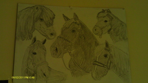 my drawing of a cavalos