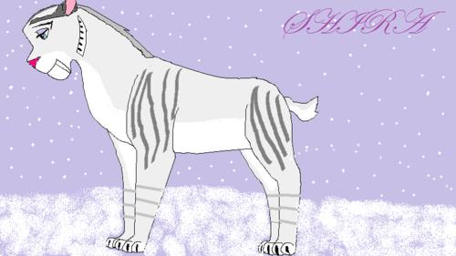 my drawing of shira