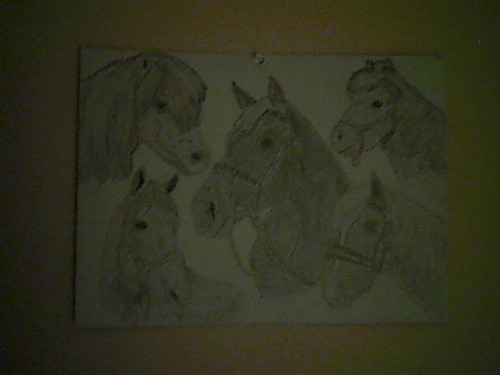 my pic of a horse