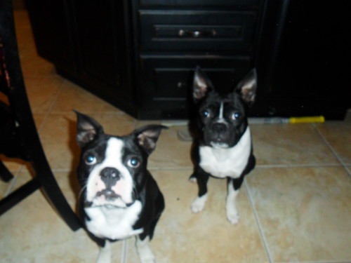 these are my 2 dogs
