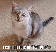 very cute but funny 猫 :P
