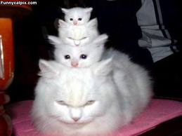 very cute but funny gatos :P