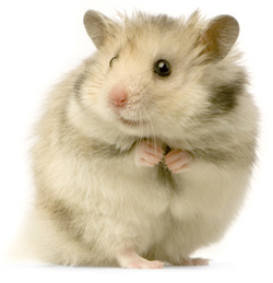 #1 hamster