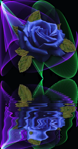 Blue Rose for My fairy sister