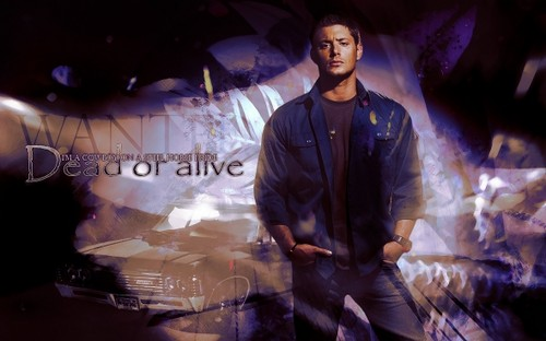 HaleyDewit wallpaper probably containing a concert, a lippizan, and a sign called Dean Winchester (Supernatural)