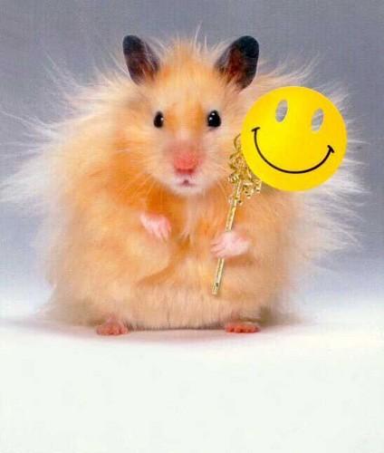 Flute hamster