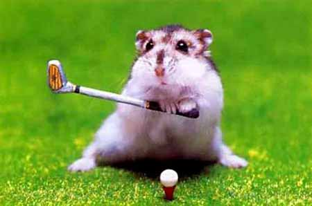 Hamsters wallpaper entitled Hamster playing Golf