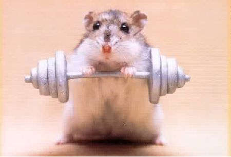 Hamster weight Lifting - hamsters Photo