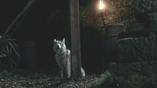 Lady - Sansa direwolf
