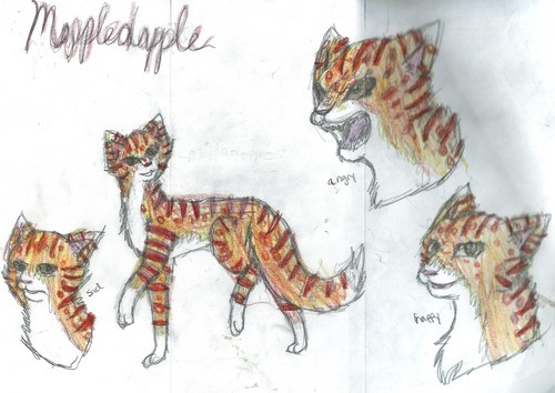 Mapplepaw(dapple)