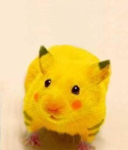 Hamsters wallpaper entitled Pickachu Hamster