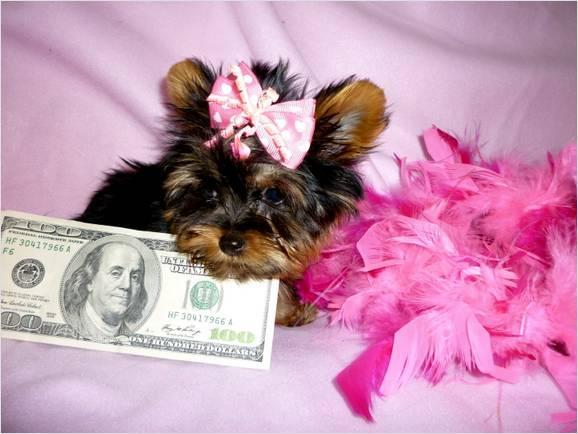 puppy with Money