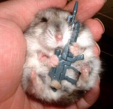 Hamster with a Weapon - hamsters Photo