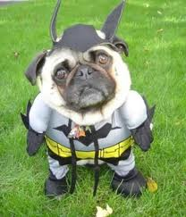 batman's dog - young-justice Photo