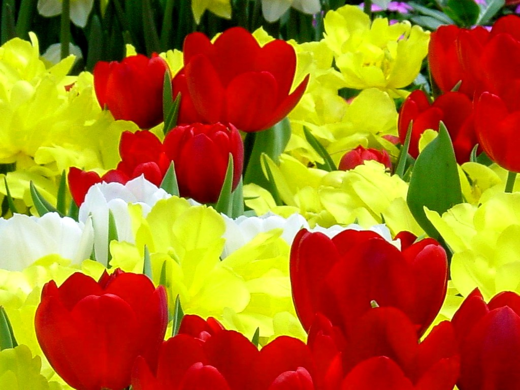 Most Beautiful Flower