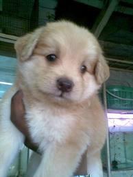 pup's