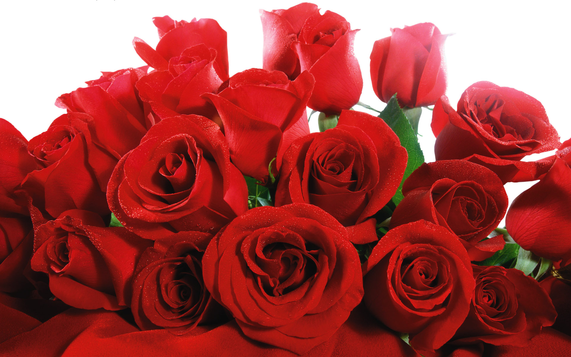 Valentine's Day Roses Flowers