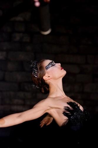 Black schwan