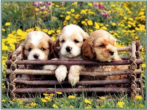 Cute spring puppies