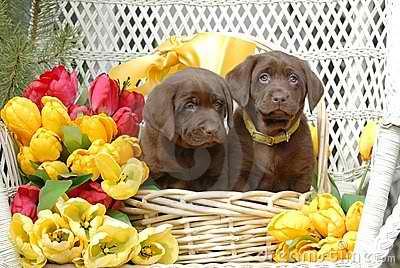 Cute spring पिल्लें