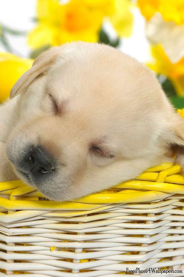 Cute spring puppy