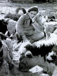 James with cows