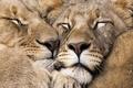 More Beautiful Animals